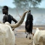 Sudan_cattle