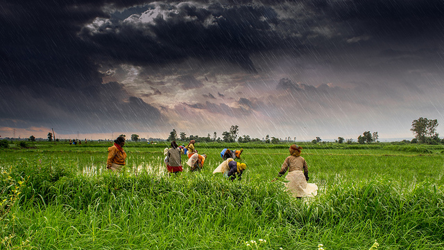 Africa must learn the lessons from India's controversial Green Revolution. Photograph by Rajarshi Mitra.