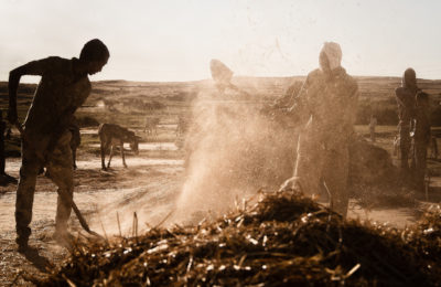 Farming near the Ethiopia-Eritrea border. Credit: Andrea Moroni.