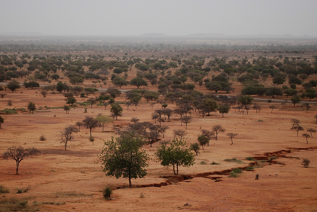 Would Nigeria be better served focusing on the Sahel than getting involved in Saudi Arabia's broader alliance? Credit: Daniel Tiveau/CIFOR.