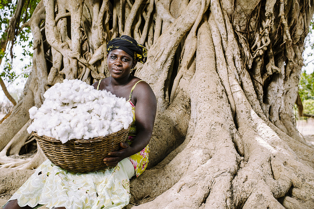 Dadjan Wassinatou, 34, holds a basket of freshly harvested cotton in the village of Zorro, Burkina Faso. Credit: Ollivier Girard/CIFOR.