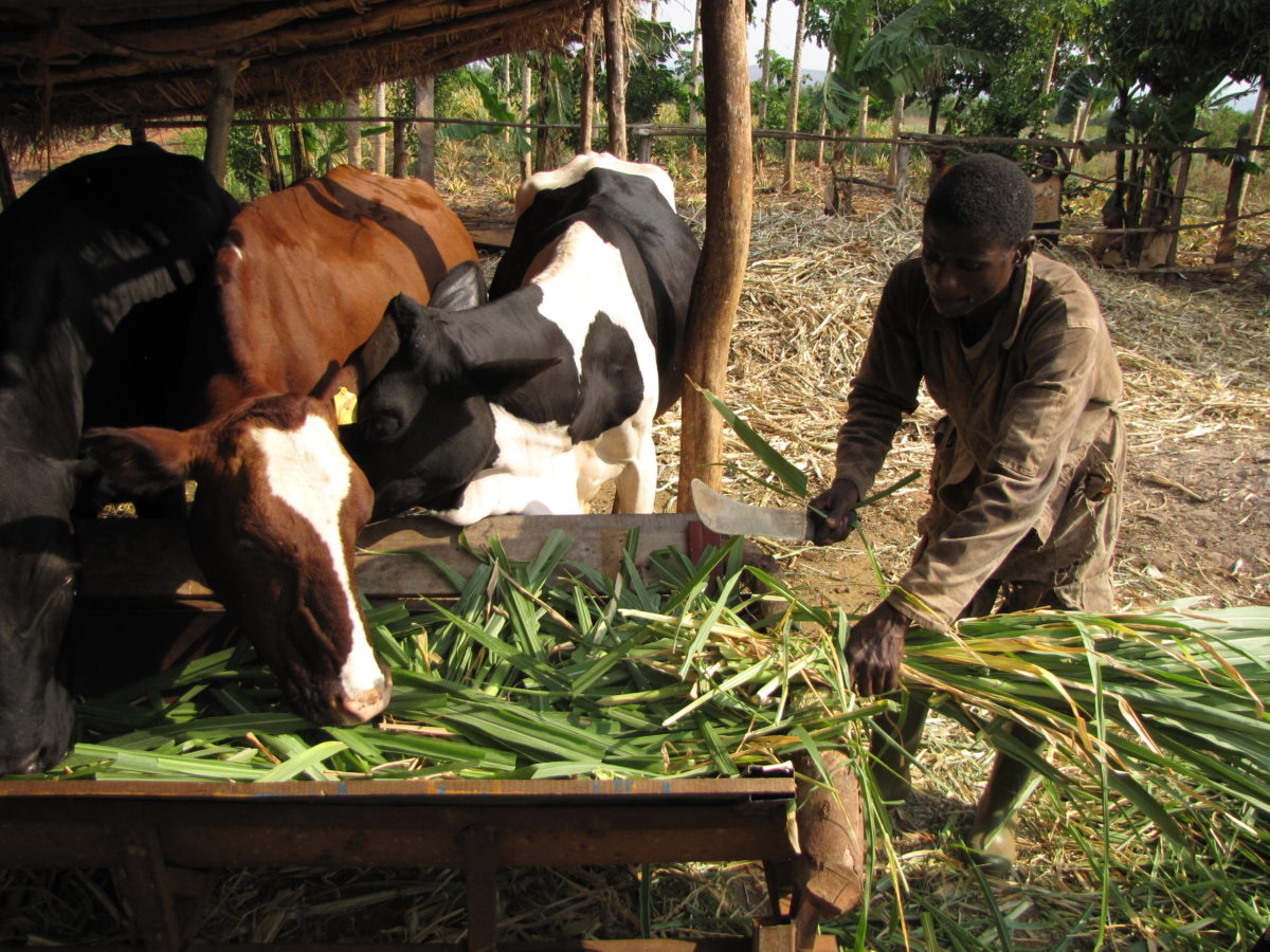 Is food self-sufficiency making a comeback? - African Arguments
