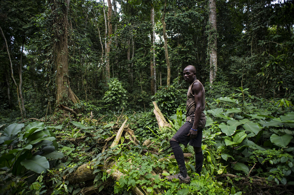 Cameroon is one of the most biodiverse countries in the world and home to over 20 protected reserves, but this is being threatened by the Cameroon crisis. Credit: Ollivier Girard/CIFOR.